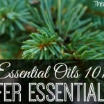 Conifer Essential Oils