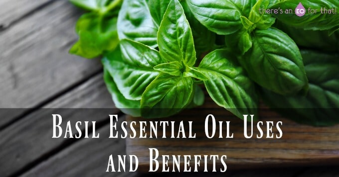 Basil Essential Oil Uses and Benefits