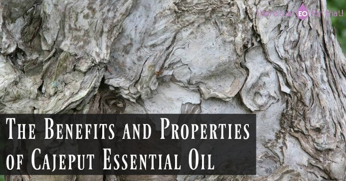 The Benefits and Properties of Cajeput Essential Oil