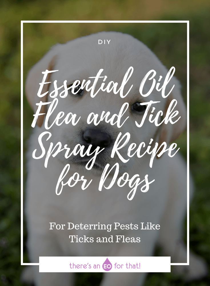 Essential Oil Flea and Tick Spray Recipe for Dogs - This spray is perfect for deterring ticks and fleas from your dog by using potent essential oils that pests hate!