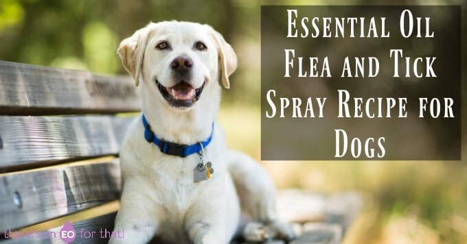 Essential Oil Flea and Tick Spray Recipe for Dogs