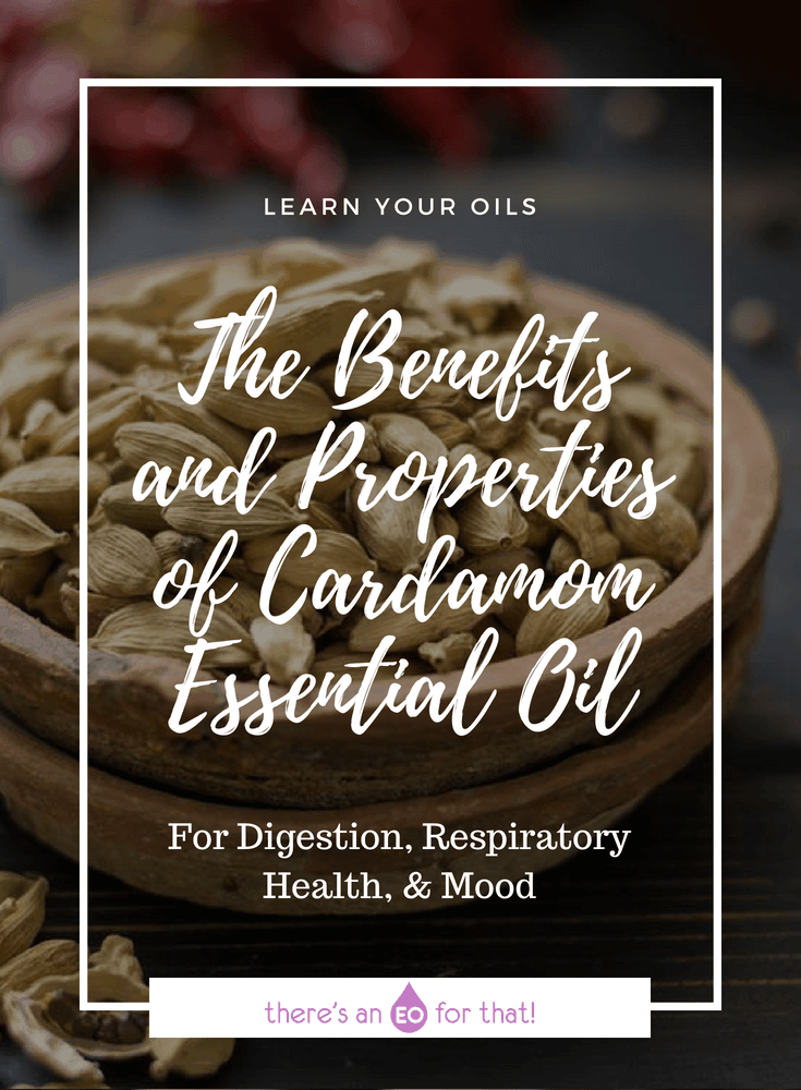The Benefits and Properties of Cardamom Essential Oil - Cardamom has been used in cooking, perfumery, and medicine since the 4th century BC, perhaps even before! Learn about the properties and benefits of cardamom essential oil and how to use it.