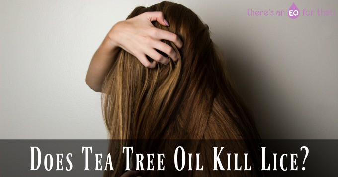 Does Tea Tree Oil Kill Lice - How to kill head lice using tea tree essential oil