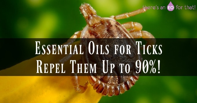 Closeup of a tick - the best essential oils for ticks